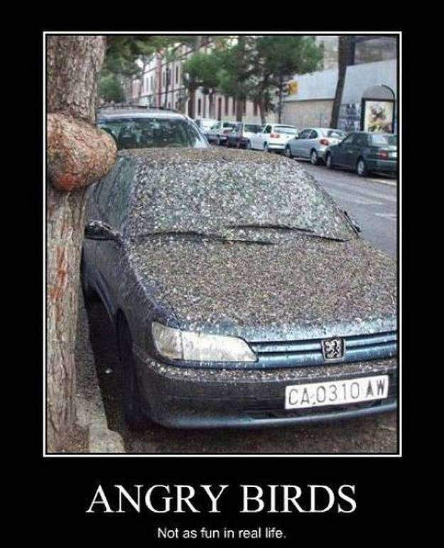 angry birds not as fun in real life funny image