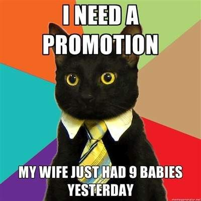 Cat need promotion grappig plaatje