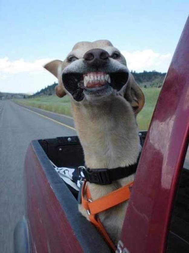 Dog big smile