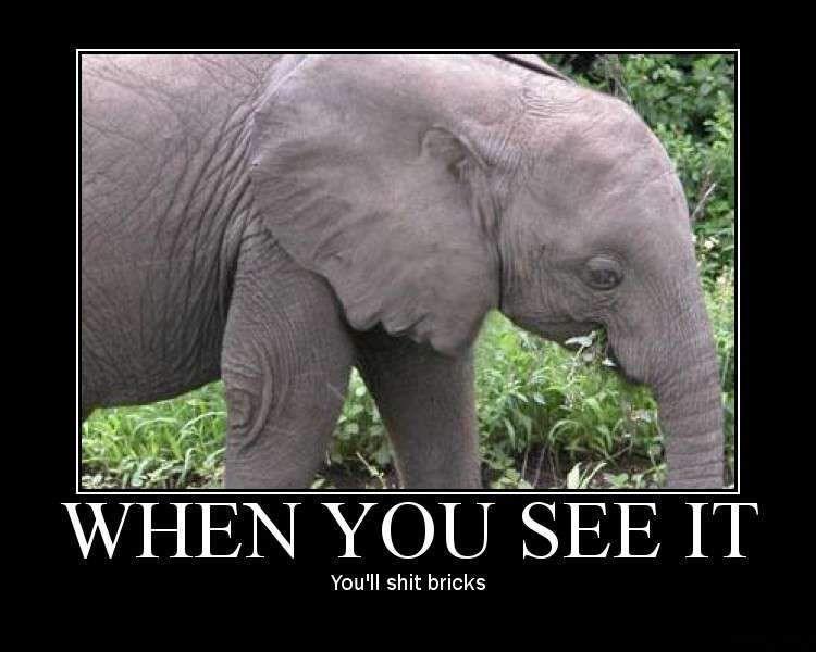 Mindfuck elephant