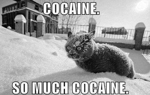 lolcat snow
