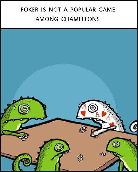 Poker Chameleons funny image